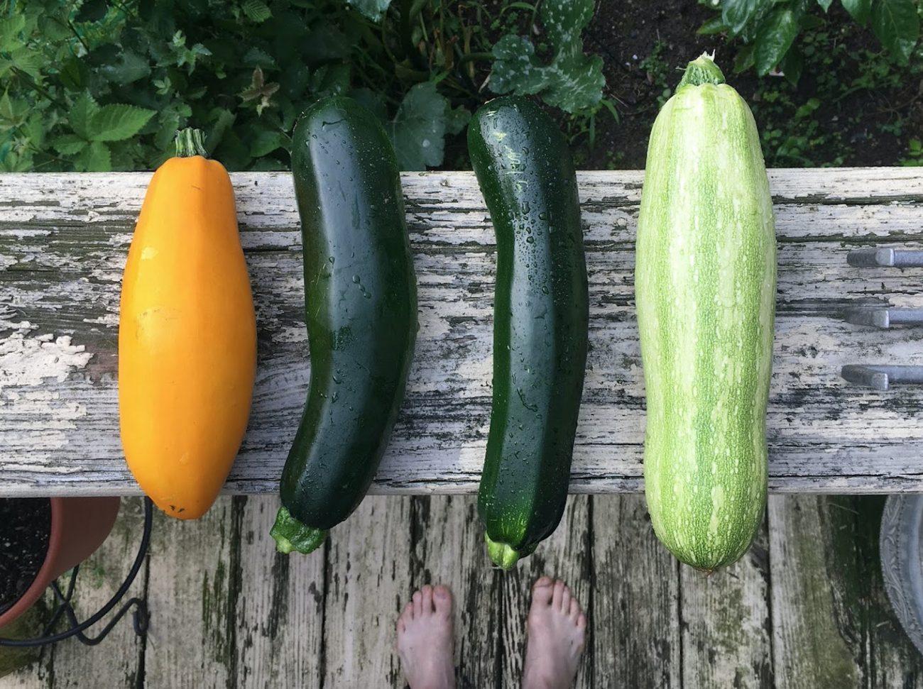 Vielseitig und vitaminreich: Zucchini