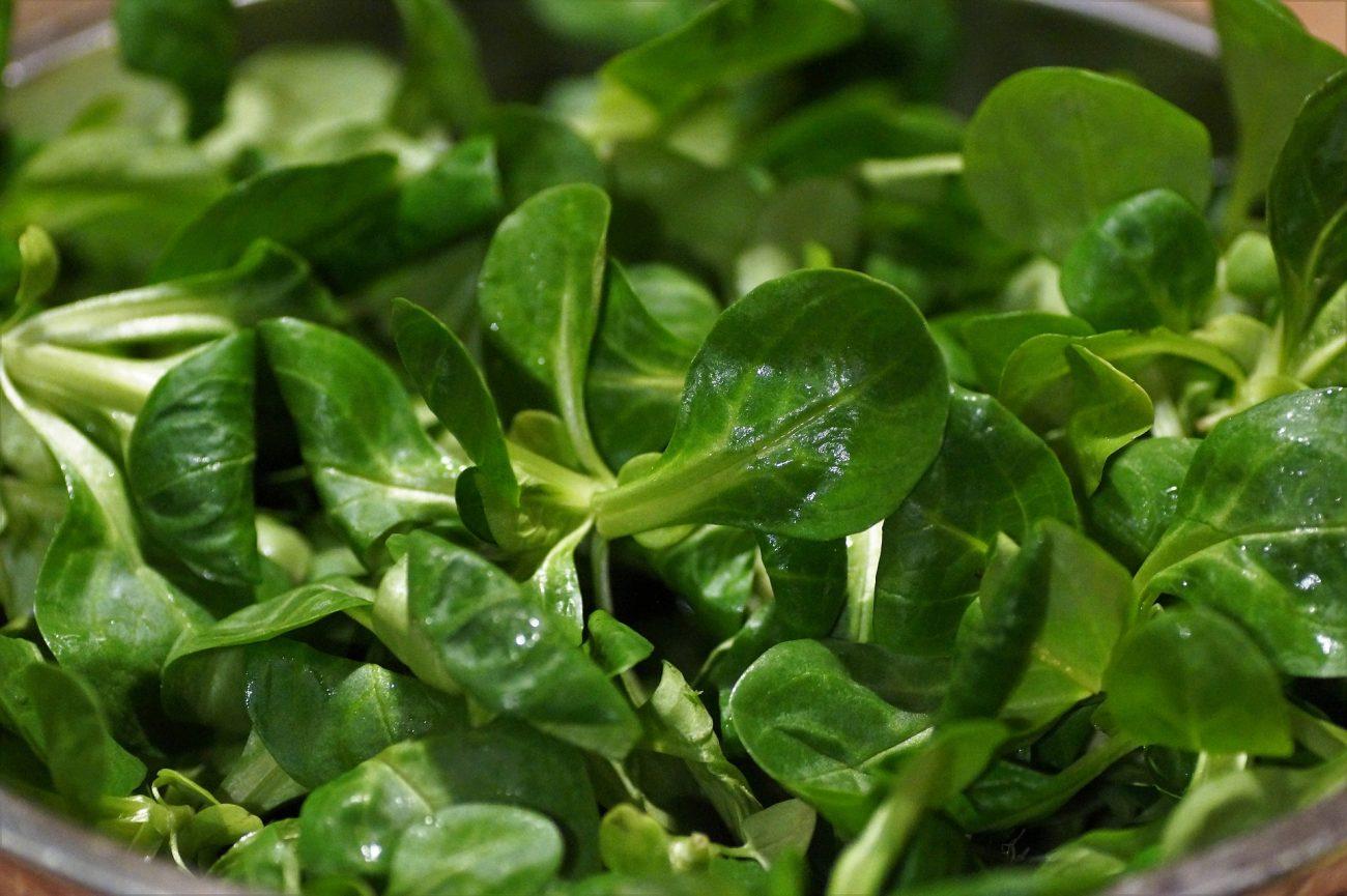 Feldsalat nicht unter fließendem Wasser waschen