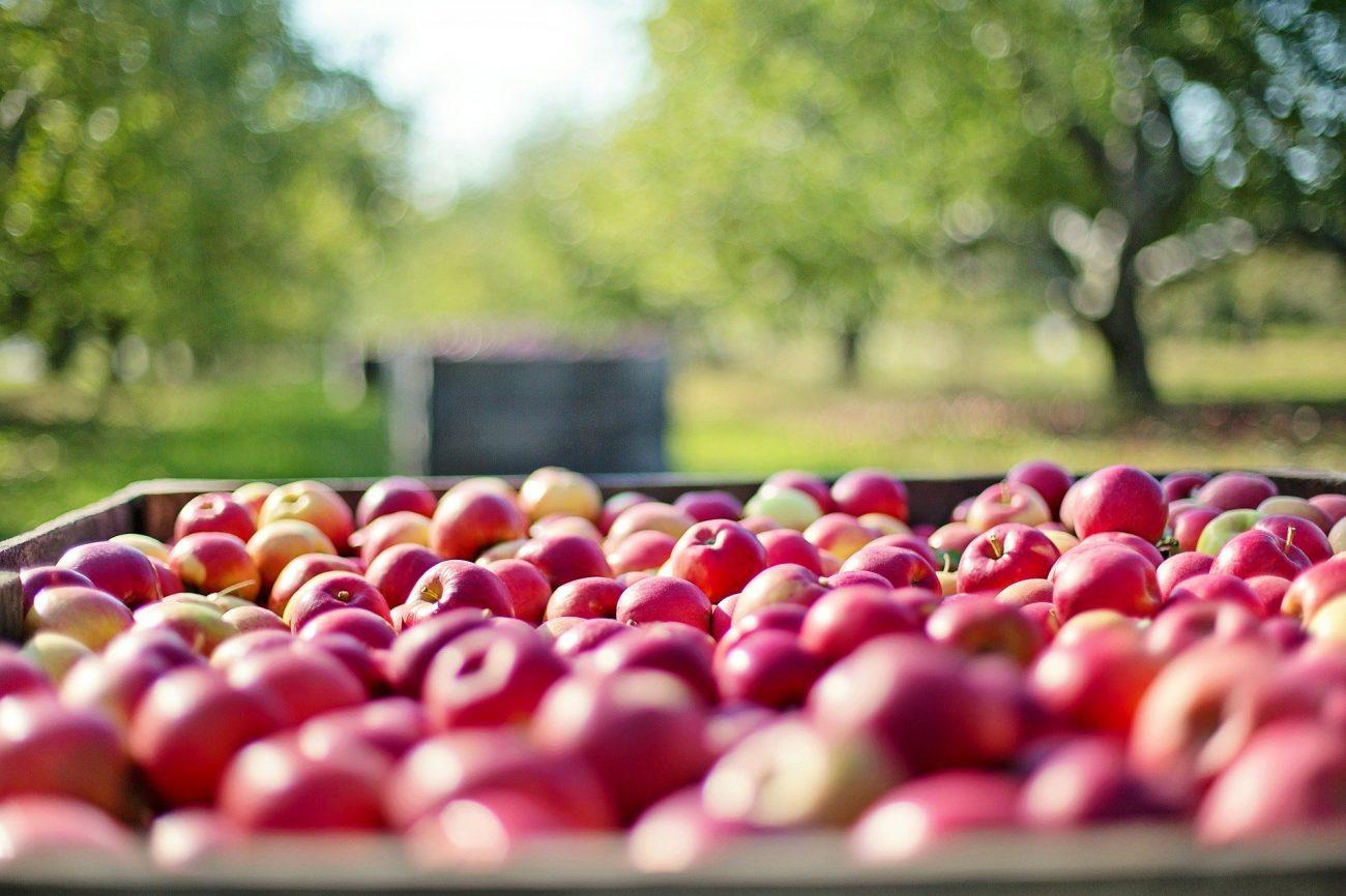 Äpfel immer kühl und ohne anderes Obst lagern
