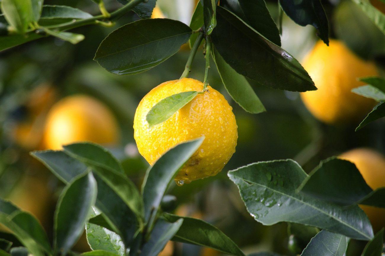 Nur Bio-Früchte sind garantiert unbehandelt